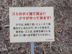Gunma_kuma1