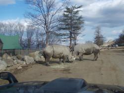 Gunma_safari12