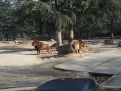Gunma_safari15