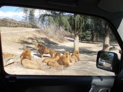 Gunma_safari18