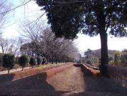 Akayama3