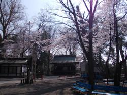 Tsuki0331a