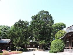 Choutokuji05