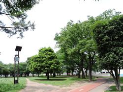 Mitsuwa01