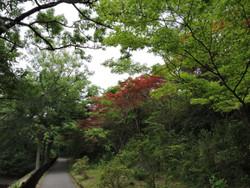 Yoshimi33