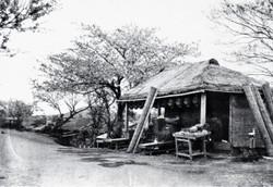 Chamise1880