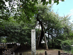 Kitamoto61