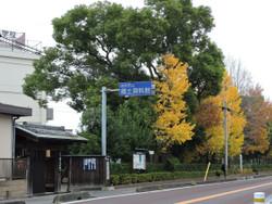 Shiki59