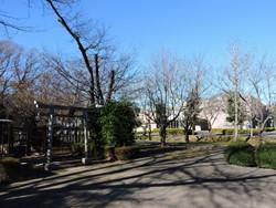 Kitazato6