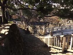 Takinogawa61