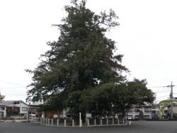 Ohkaya01