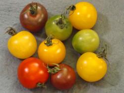 Tomato89