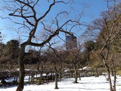 Koishikawa07