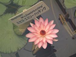 Kawaguchi_g2