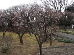 Kawaguchi_g8