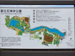 Syakuji19