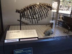 Shizenhaku18