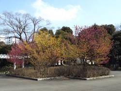 Shimizu31