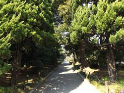 Shimizu33