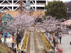 Sakura_g05