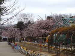 Sakura_g07