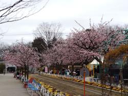 Sakura_g10
