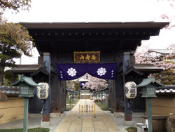 Angyousakura40