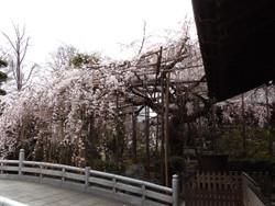 Urawa1603_3
