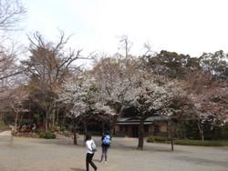 Mishima03