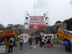 Sakura_a01