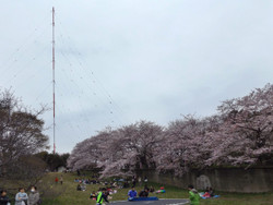 Sakura_b09