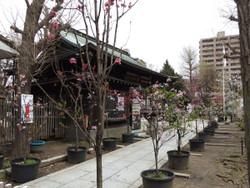 Arakawa_16