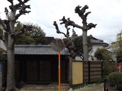 Asakura10