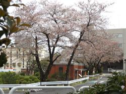 Mikawashima13