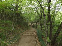 Kanayama_guide6
