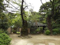 Nakano19