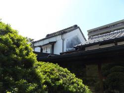 Warabi_kaneko6
