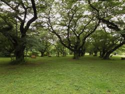 Koishikawa_32