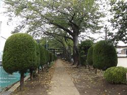 Kawaguchi_tsurugamaru1