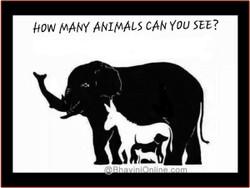 Animal16a