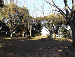 Minakoku_shiba01