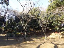 Minakoku_shiba04