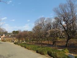 Kawaguchi_0131a