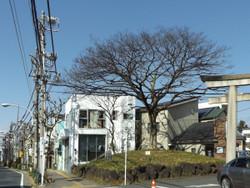 Kitaku_nihonenoki88