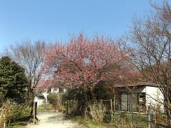 Kawaguchi_kouzenin3