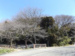 Kawaguchi_kizoro1