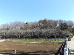 Kawaguchi_kizoro2