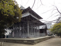 Adachiku_hikawa5