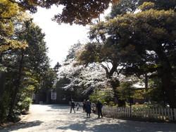 Oji_furukawa2