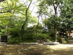 Adachi_iriya5